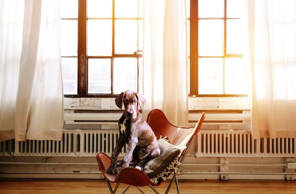 Dog Chair Boss Executive Chair - SarahRichterArt / Pixabay